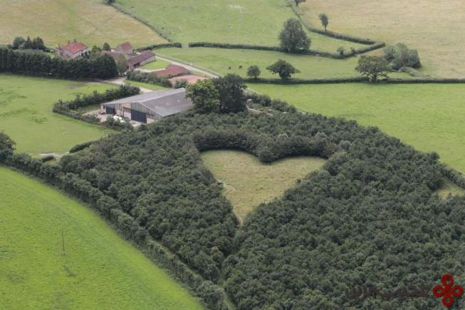 جنگلی به شکل قلب