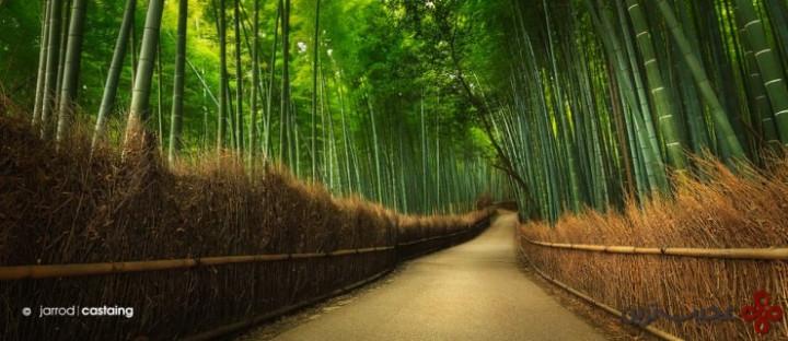 جنگل بامبوی آراشییاما (arashiyama)، کیوتو، ژاپن