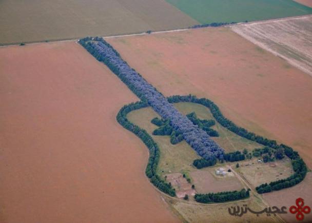 جنگل گیتار