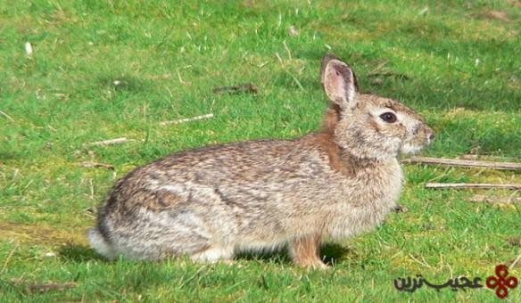 جوندگان و خرگوشها