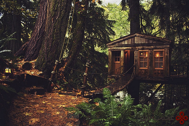 خانهای درختی در سیاتل، آمریکا