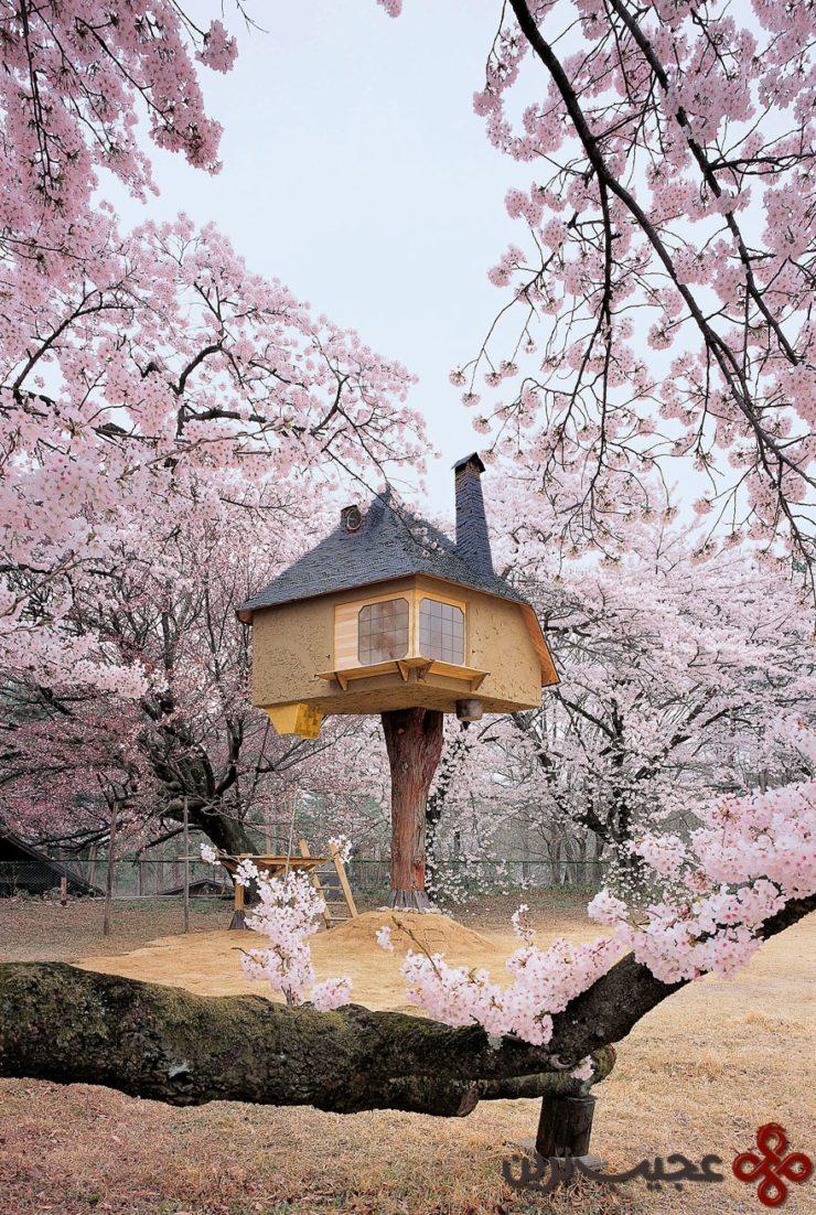 خانهی درختی تتسو (tetsu)، یاماناشی (yamanashi)، ژاپن