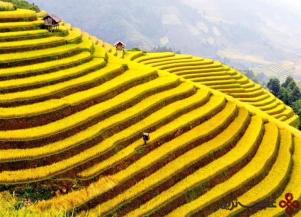 درهی موآنگ هوا (muong hoa)، سا پا (sa pa)، استان لائو کای (lào cai )، ویتنام