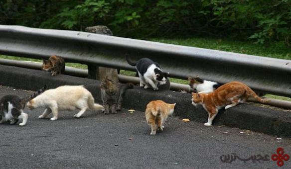 سگها و گربههای وحشی
