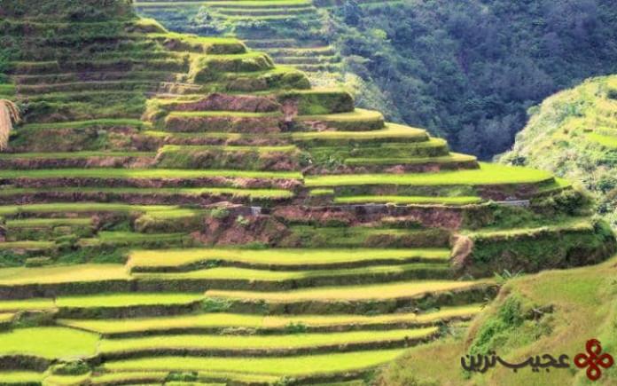 شالیزارهای پلکانی کوههای کوردیلرای، فیلیپین