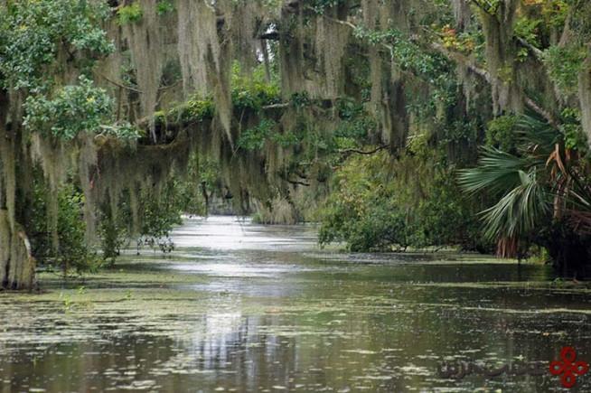 شاهزاده خانم و قورباغه، نهرهای کوچک لوئیزیانا، ایالات متحده