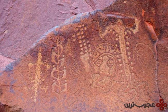 شبهجزیره بوروپ، استرالیا