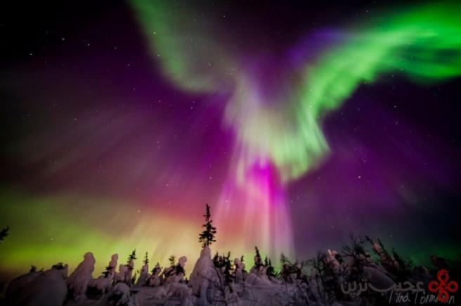 شفق قطبی ۱