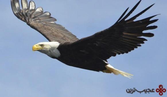 عقاب گر
