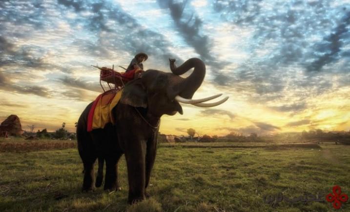 فیل سواری1