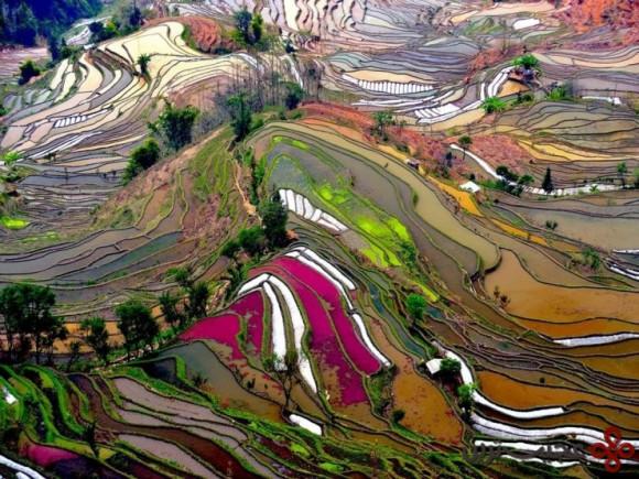 محوطهی تراسهای برنجی یوانیانگ (yuanyang)، یوننان، چین