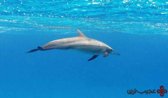 والها و دلفینها