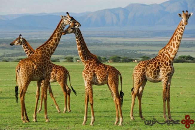 پارک ملی سرنگتی، تانزانیا