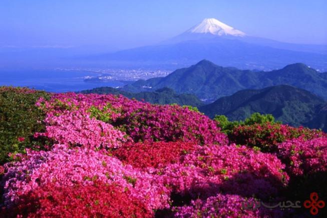 پارک ملی فوجی هاکونه ایزو، ژاپن