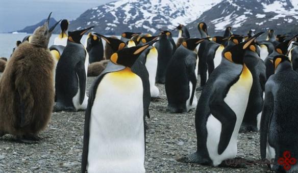 پنگوئن امپراتور