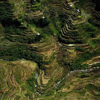 کاور شالیزارهای برنج بانائو