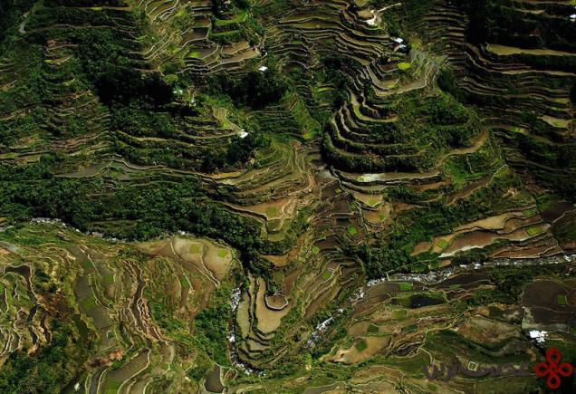 4شالیزارهای برنج بانائو