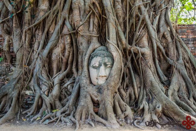 آیوتایا سر بودا