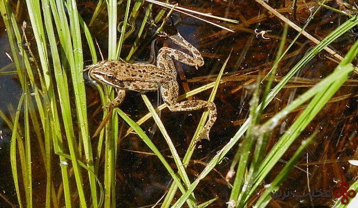 amphibians of alaska