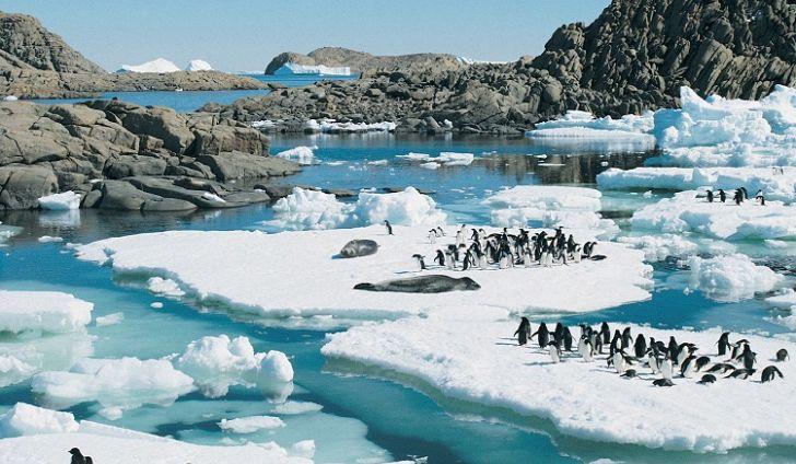 cover antarcitca