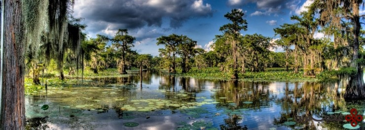 caddo lake, texas and louisiana3