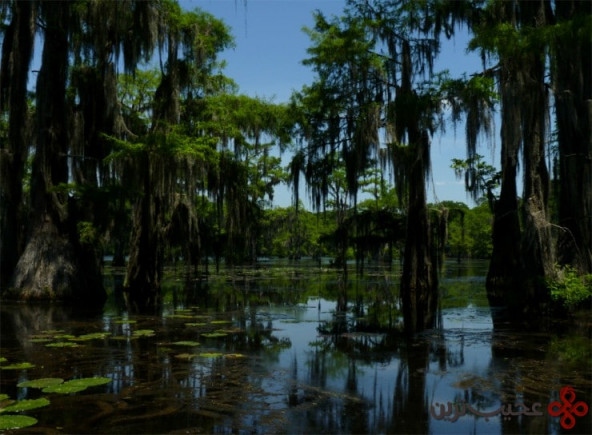 caddo lake, texas and louisiana4
