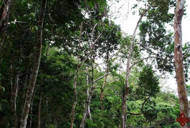 darien gap، مسیر پاناما به کلمبیا