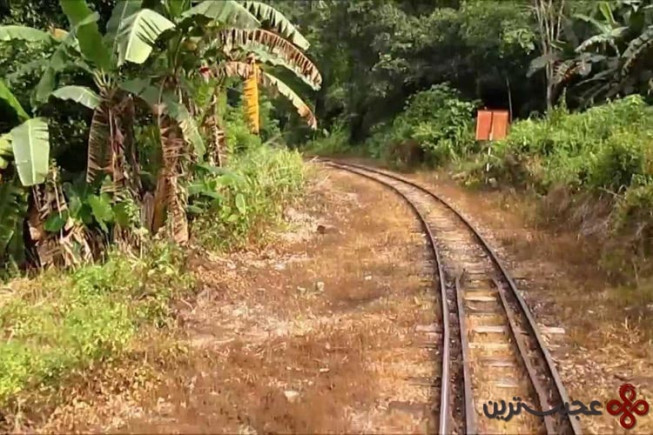 jungel railway