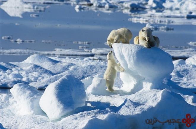 sea ice, spitsbergen, svalbard