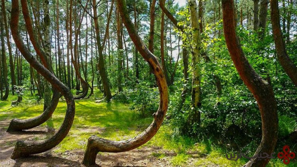 the crooked forest 3