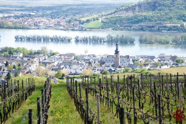top german villages rüdesheim3