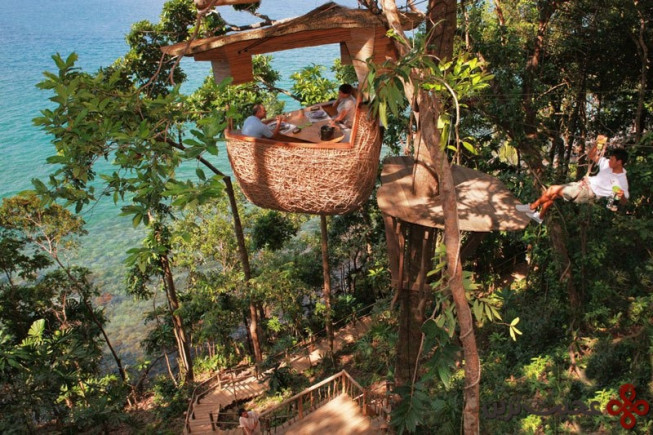 tree top dining with zip line service