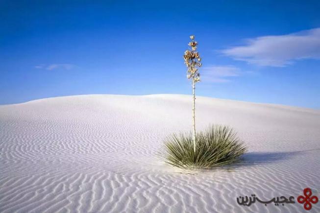 white sands1