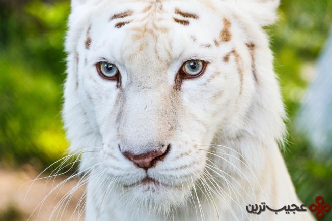 zoo by djorde boskovic