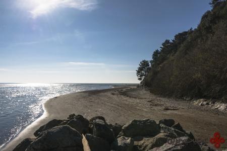 bolinas beach california
