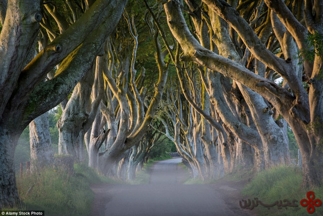 دارک هجز (the dark hedges, county antrim, northern ireland)