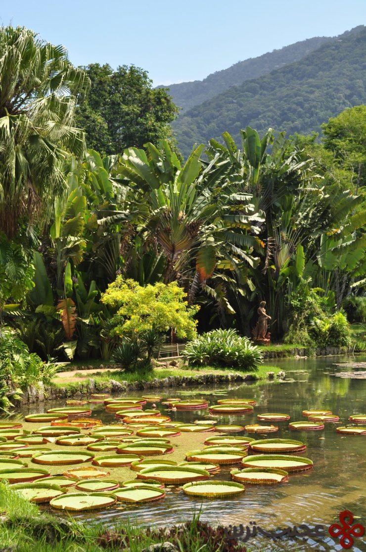 در ریو عاشق جاردیم بوتانیک میشوید