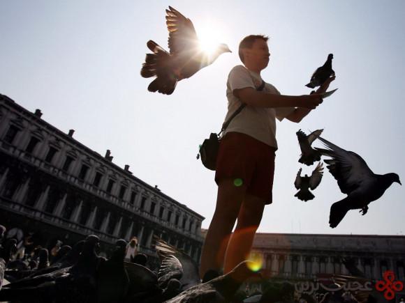 غذا دادن به کبوتران در ونیز ممنوع