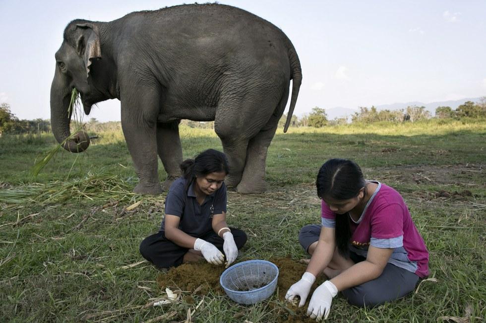 کاور قهوه مدفوع فیل