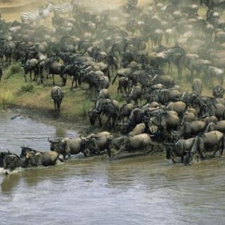 کاور ۱۰ موجود برتر ساکن آفریقا