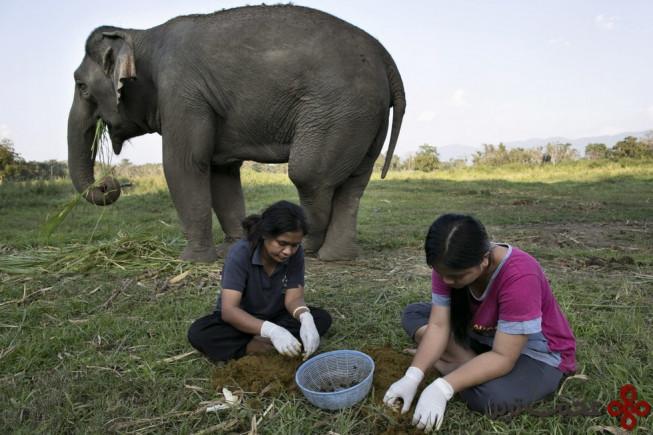 10قهوه مدفوع فیل