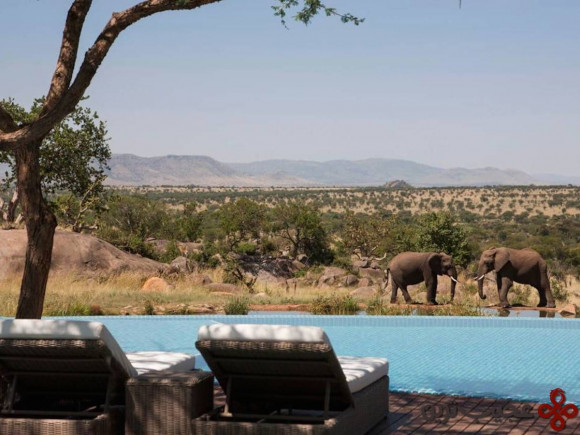 chances are that while you're enjoying some pool time at the four seasons safari lodge in serengeti national park in tanzania, elephants and giraffes will be