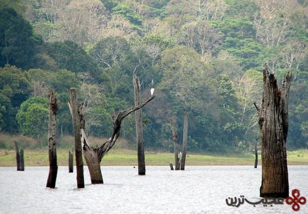 lake periyar, india1