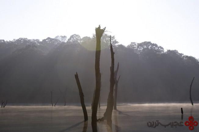lake periyar, india3