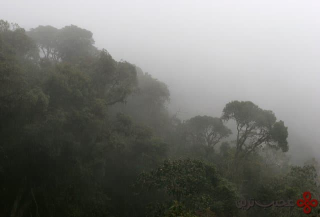 tandayapa cloud forest