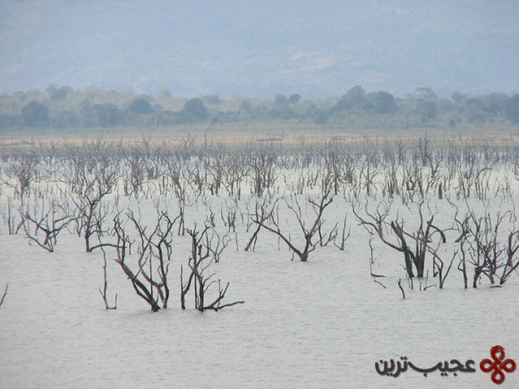 udawalawe reservoir, sri lanka2