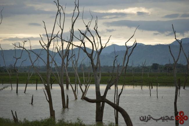 udawalawe reservoir, sri lanka3