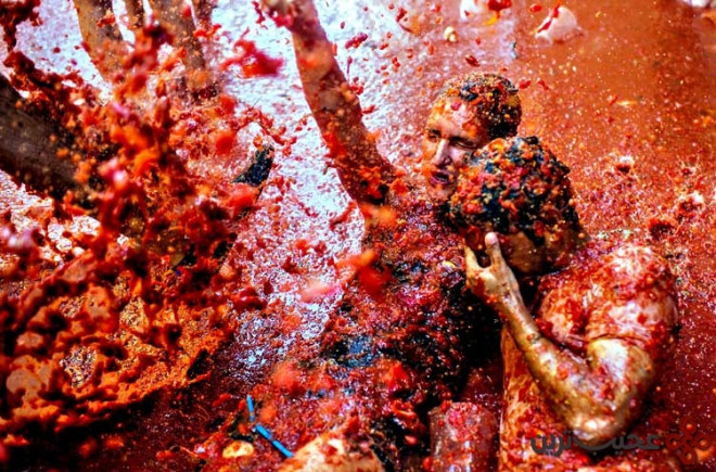 the world's biggest tomato fight at tomatina festival bunol, s
