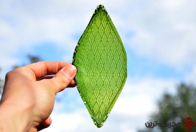 تولید اکسیژن از طریق برگ مصنوعی