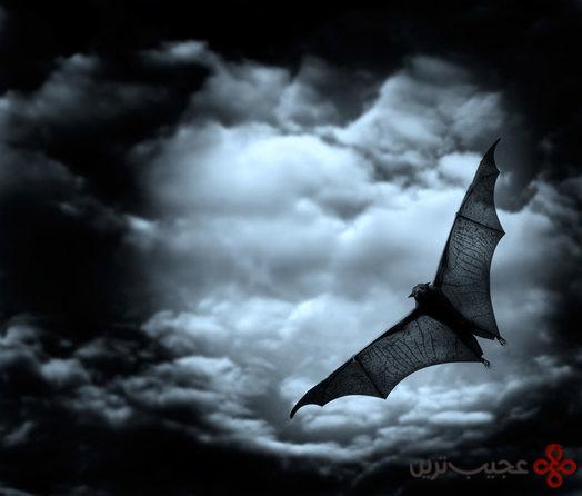 خفاشها
